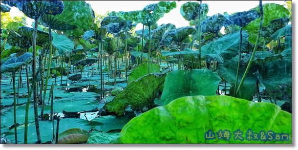 雙鯉溼地自然中心